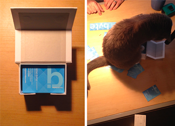 image of the office cat aiding in the unboxing of the new business cards
