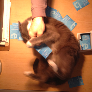 Image of Mokey once again attempting to bite either a hand, a business card, or both